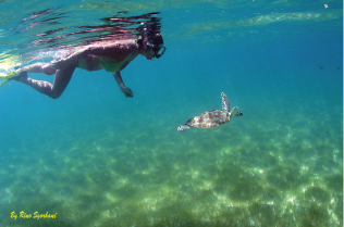 PICTURE SNORKEL WITH TURTLES