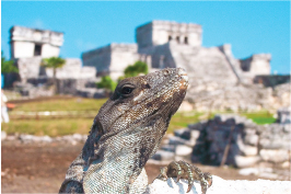 PICTURE TOUR TULUM XTREME